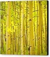 Autumn Aspens Vertical Image  Canvas Print