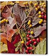Autumn Berries And Leaves Background  Canvas Print