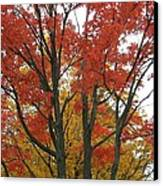 Autumn Duel Canvas Print by Todd Sherlock