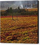 Autumn In Napa Valley Canvas Print