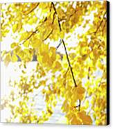 Autumn Leaves On Branch With Lake In Background, Close-up Canvas Print