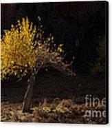 Autumn Light Canvas Print by Mike  Dawson