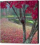 Autumn Red Canvas Print by Rob Travis