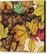 Autumn Splendor Canvas Print by JQ Licensing
