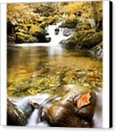 Autumnal Stream Canvas Print by Mal Bray