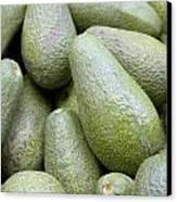 Avocado Greens Canvas Print by Steve Outram