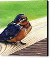 Baby Barn Swallow Canvas Print by Peggy Dreher
