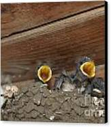 Baby Birds  Picture Canvas Print by Preda Bianca