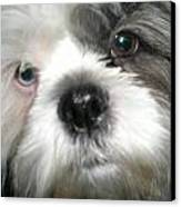 Baby Face Dog Canvas Print by Sherry Hunter