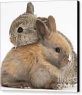 Baby Rabbits Canvas Print by Mark Taylor