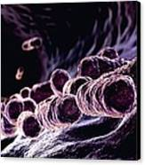 Bacteria, Computer Artwork Canvas Print by Animate4.comscience Photo Libary