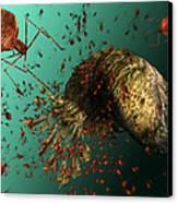 Bacteriophage Viruses Canvas Print by Karsten Schneider