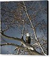 Bald Eagle In A Tree Canvas Print