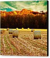 Bales Of Autumn Canvas Print