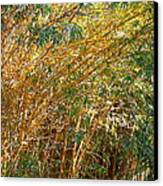 Bamboo Stand Please Buy Me Canvas Print by Michael Clarke JP