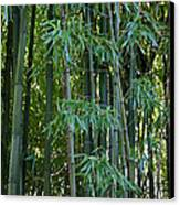 Bamboo Tree Canvas Print by Athena Mckinzie