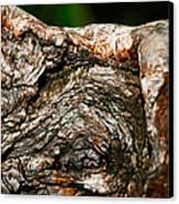 Bark Canvas Print by Christopher Gaston