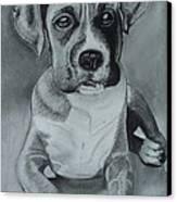 Baxter Canvas Print by Kim Shayler