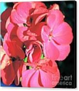 Beautiful Begonia Canvas Print by Lorraine Louwerse