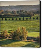 Beautiful Landscape With Trees And Field Canvas Print