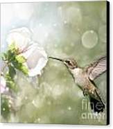 Beauty In Flight Canvas Print by Sari ONeal