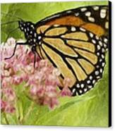 Beauty Of Nature Canvas Print by Jack Zulli