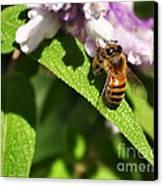 Bee At Work Canvas Print by Kaye Menner