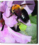 Bee On Azalea Bloom Canvas Print by Lisa Phillips