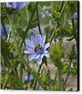 Bee On Romaine Flower Canvas Print