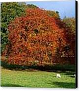 Beech Tree, Glendalough, Co Wicklow Canvas Print by The Irish Image Collection
