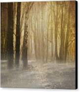 Beware Misty Woodland Path Canvas Print