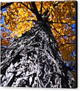 Big Autumn Tree In Fall Park Canvas Print