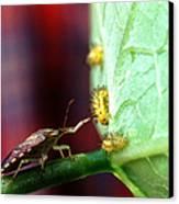 Biocontrol Of Bean Beetle Canvas Print