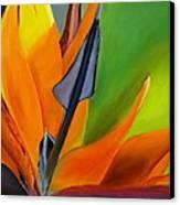 Bird Of Paradise Canvas Print by Prashant Shah