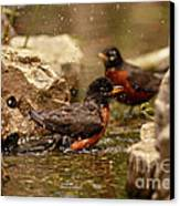 Birds Of A Feather Swim Together Canvas Print by Inspired Nature Photography Fine Art Photography