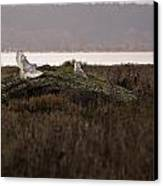 Birds Of Bc - No.15 - Snowy Owl - Bubo Scandiacus Canvas Print
