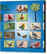 Birds Of The Neighborhood Canvas Print
