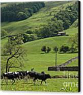 Bishopdale In The Yorkshire Dales National Park Canvas Print by Louise Heusinkveld