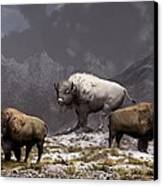 Bison King Canvas Print