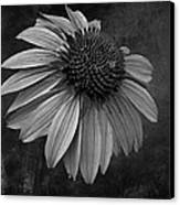 Bittersweet Memories - Bw Canvas Print by David Dehner