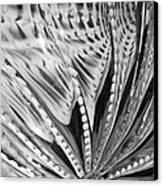 Black - White Canvas Print by Jan Canavan