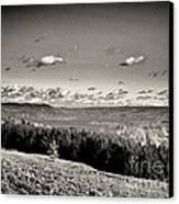 Black And White Above The Vines  Canvas Print by Joshua House
