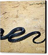 Black Mamba Canvas Print by Elizabeth Kingsley
