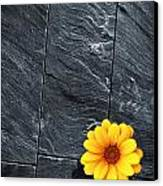Black Schist Flower Canvas Print by Carlos Caetano