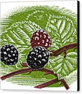 Blackberries, Woodcut Canvas Print by Gary Hincks