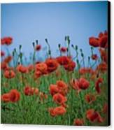 Blood Red Poppies On Vibrant Green And Blue Sky Canvas Print by Edward Carlile Portraits