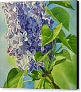 Blue And Lavender Lilacs Canvas Print
