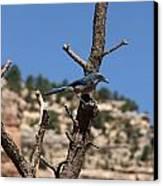 Blue Bird Grand Canyon National Park Arizona Usa Canvas Print by Audrey Campion