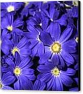 Blue Gerber Canvas Print by Al Hurley