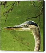 Blue Heron Canvas Print by Todd Sherlock
